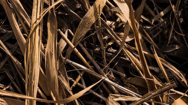 乾いた草のオーバーヘッドビュー 無料写真