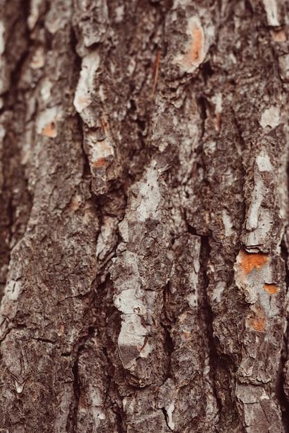 木のマクロ撮影 無料写真