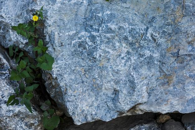 岩で成長している緑の葉の立面図 無料写真