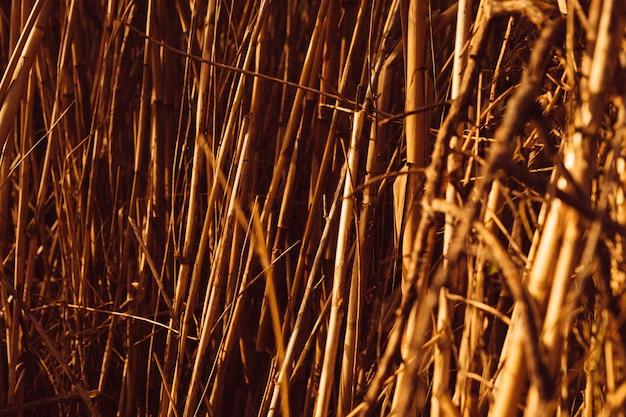 茶色の葦のフルフレームショット 無料写真