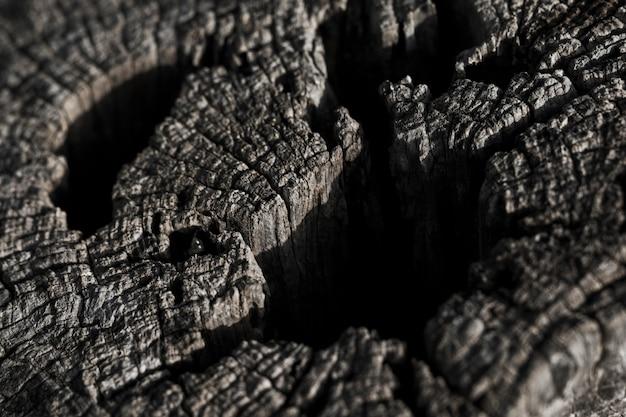 木の質感のマクロ撮影 無料写真