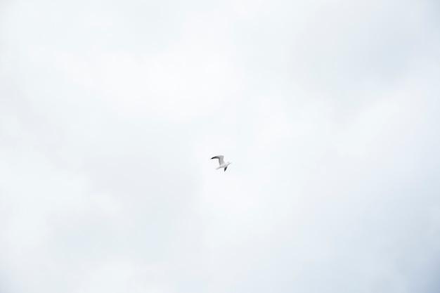 鳥 無料写真
