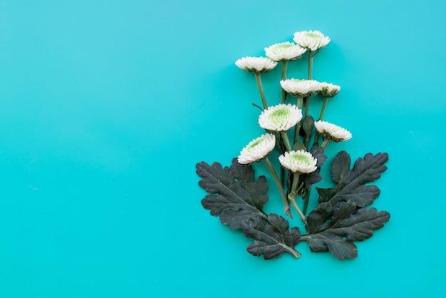 青い背景に白い花のコンポジション 無料写真