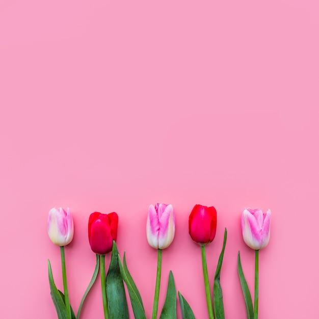 Ряд красочных свежих цветов Бесплатные Фотографии