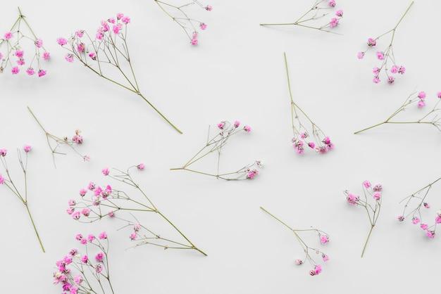 新鮮なピンクの花の小枝 無料写真
