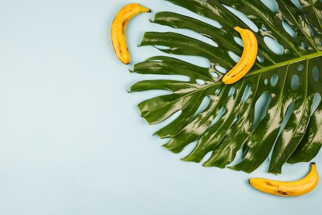 バナナの間で大きな緑のモンステラの葉 無料写真
