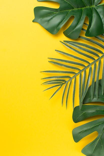 緑の熱帯植物の葉 無料写真