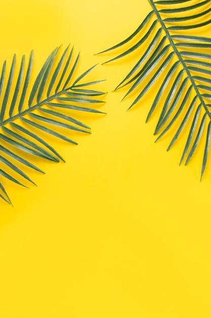緑のエキゾチックな植物の葉 無料写真