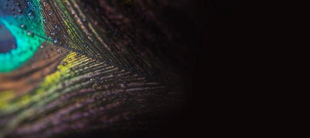 黒い背景にカラフルで芸術的な孔雀の羽のパノラマビュー 無料写真