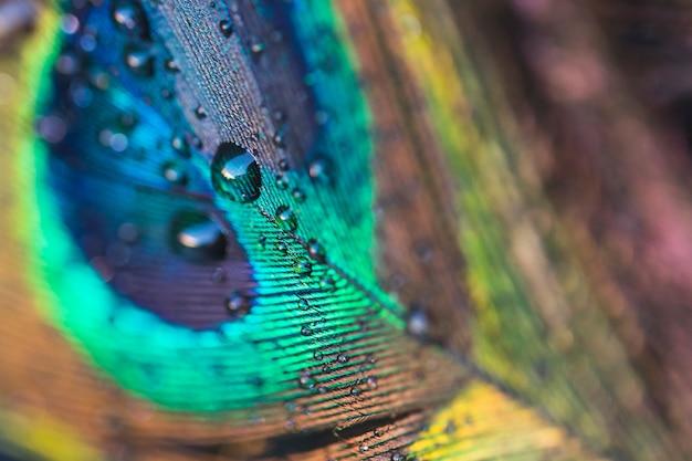水滴を持つカラフルなエキゾチックな孔雀の羽 無料写真