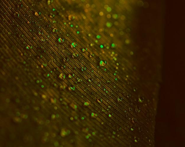 ぼやけた茶色の羽毛の表面に透明な緑色の水滴 無料写真