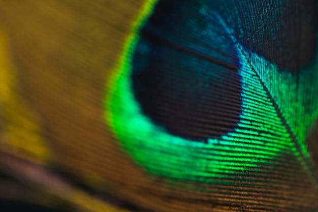 ぼやけている孔雀の羽の背景のフルフレーム 無料写真