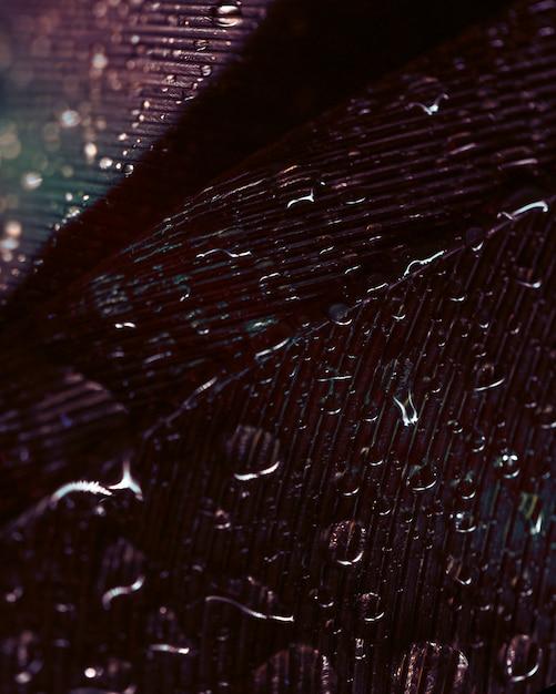 羽の表面に流れる水滴 無料写真