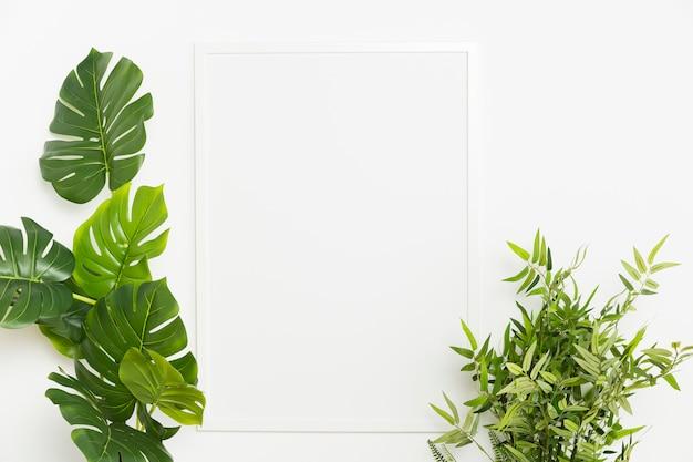 空のフレームを持つ装飾的な植物 無料写真