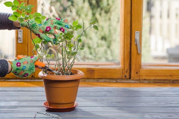 植物と庭の静物 無料写真