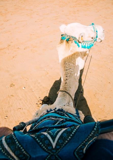 モロッコの砂漠の風景の中のラクダ 無料写真