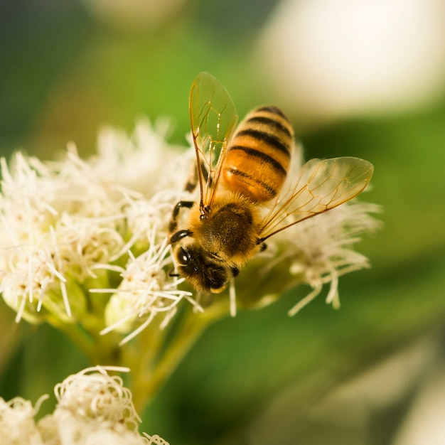 花粉を探している蜂 無料写真