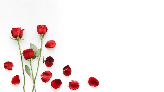 赤いバラの花 無料写真