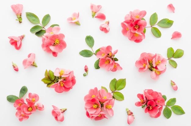 装飾的な花柄 無料写真