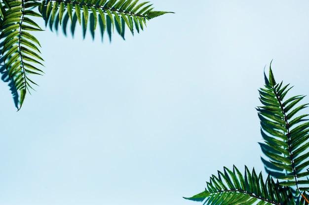 ヤシの葉のフレーム 無料写真