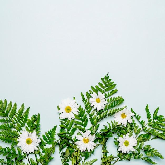 白いカモミールと灰色の表面に緑の葉 無料写真