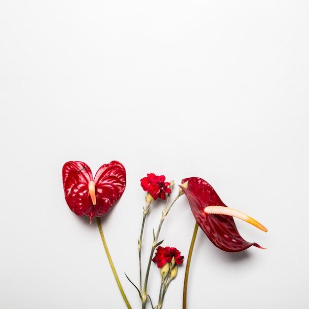 白地に赤い花 無料写真