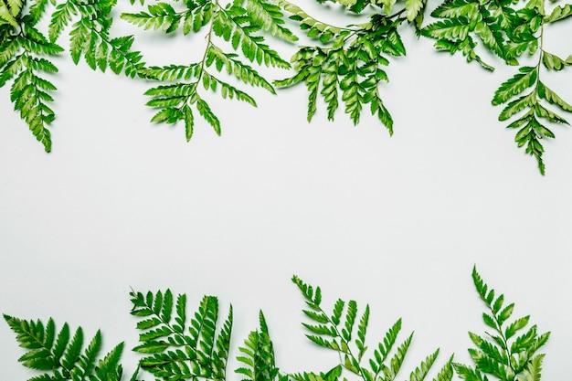 シダの葉の白い背景 無料写真