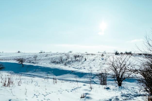 青い空を背景に山の雪に覆われた風景の上の裸の木 無料写真