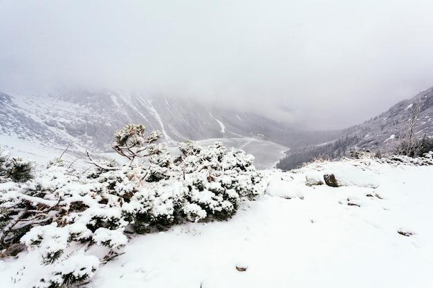 冬の雪に覆われた木の俯瞰 無料写真