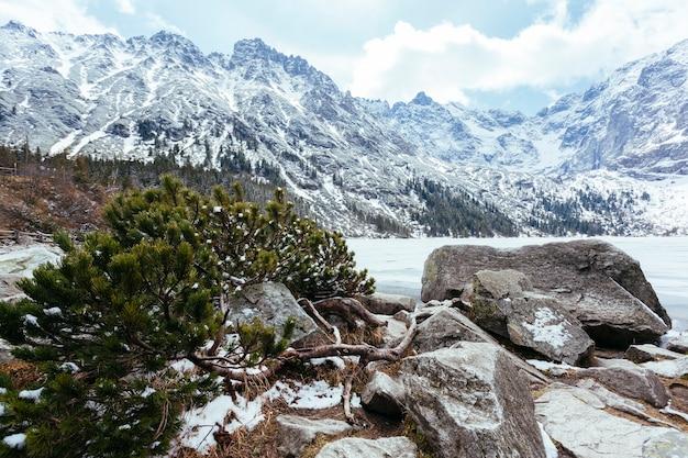 冬の湖の近くの落ちた緑のトウヒの木 無料写真