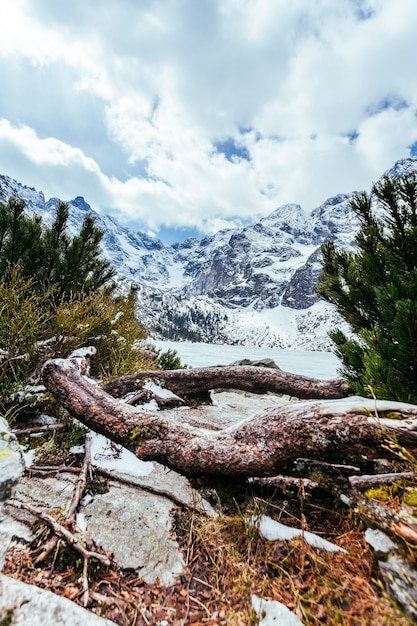 Упавшее дерево со снежным пейзажем Бесплатные Фотографии