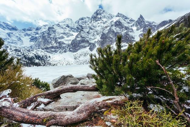 湖と冬の山の近くの緑のモミの木 無料写真