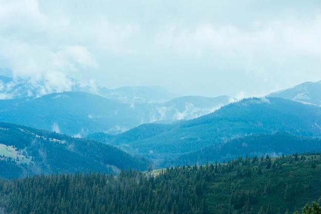 緑の山々のモミの森 無料写真
