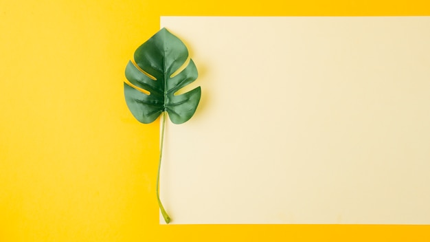 黄色の背景に空白の紙の近くのモンステラの葉 無料写真