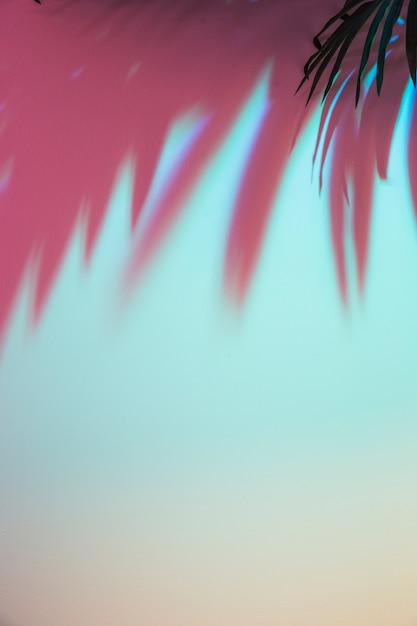 色付きの背景上の葉の色付きの影 無料写真
