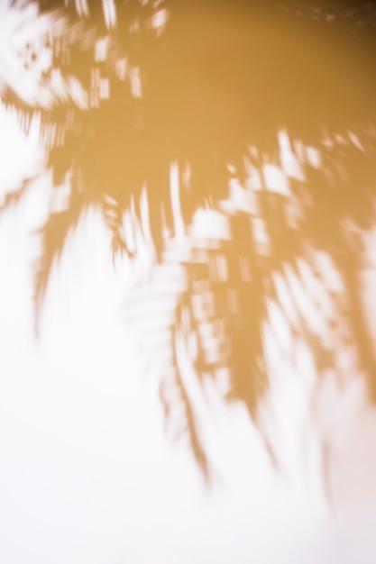 白い背景の上の葉のぼやけた影 無料写真