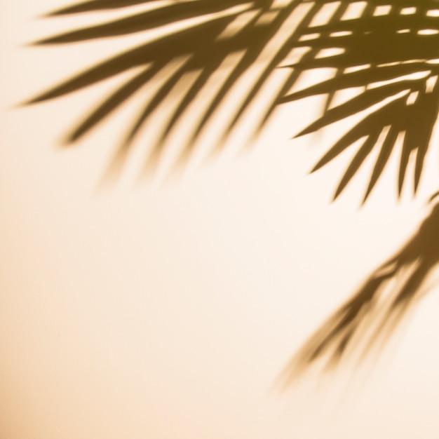 ベージュ色の背景上の葉の影 無料写真