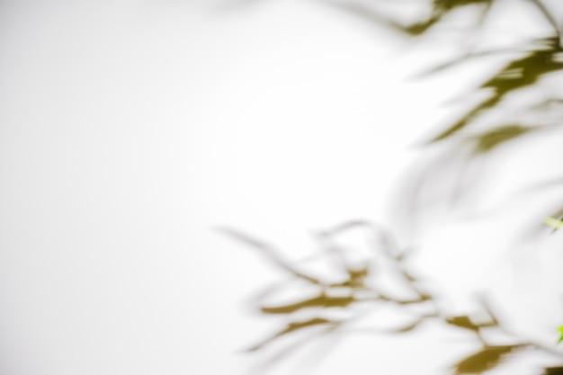 白い背景で隔離の葉の影 無料写真
