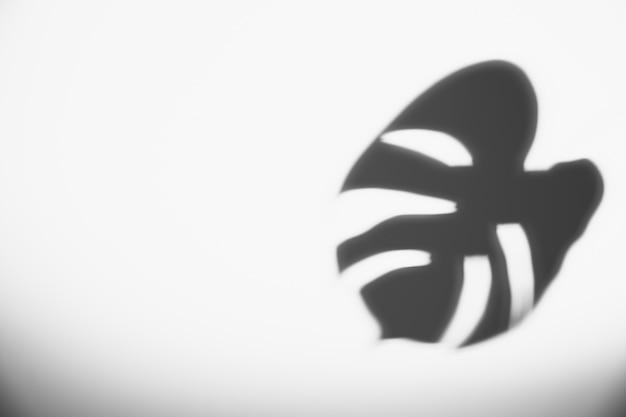 白い背景に黒のモンステラの葉 無料写真
