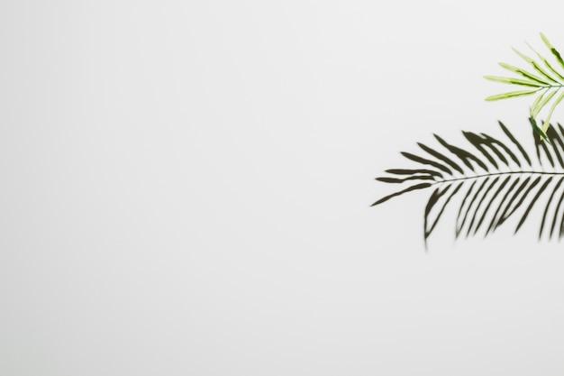 白い壁の背景に落ちる葉 無料写真
