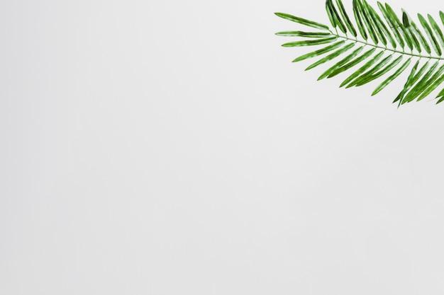 白い背景の角に自然の緑のヤシの葉 無料写真