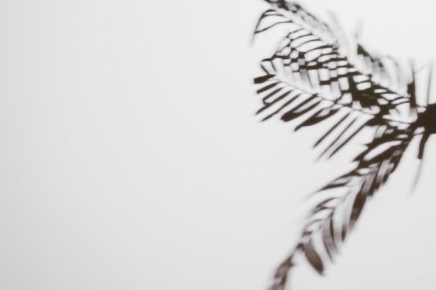 ヤシの葉の白い背景で隔離の影 無料写真