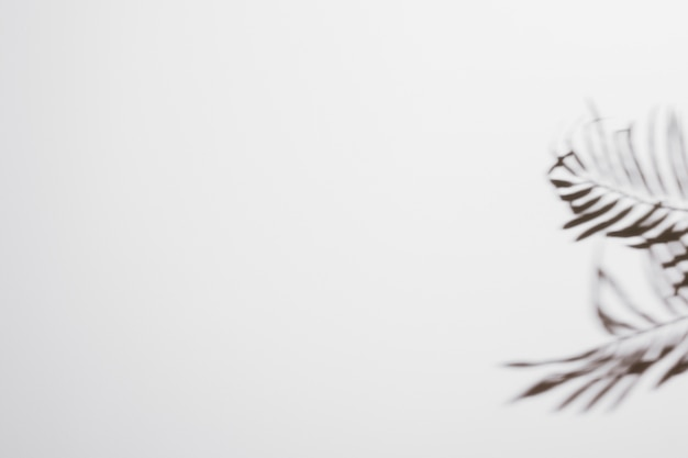 白い背景の上の新鮮な熱帯日付ヤシの葉影 無料写真