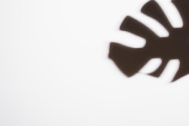 白い背景に黒の熱帯モンステラの葉影 無料写真