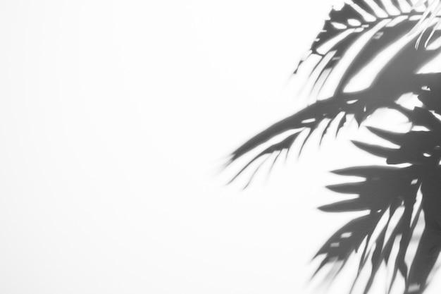 白い背景に日光と黒い影を葉します。 無料写真