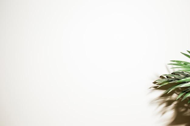 緑のヤシの葉と白い背景の上の影 無料写真
