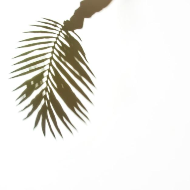 白い背景の上のヤシの葉を持っている手の影 無料写真