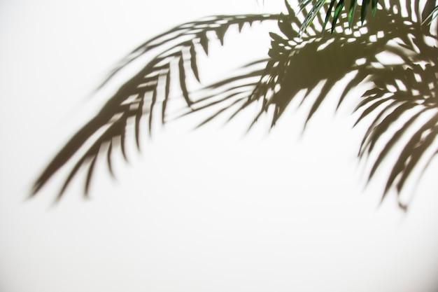 緑のヤシの葉が白い背景の上の影 無料写真
