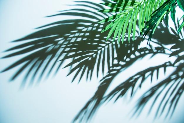 青い背景に新鮮な熱帯ヤシの葉影 無料写真