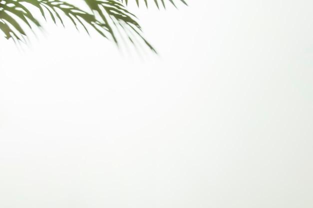 白い背景の隅に緑の葉 無料写真